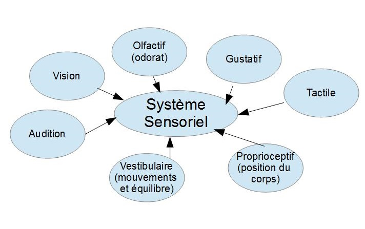systeme-sensoriel