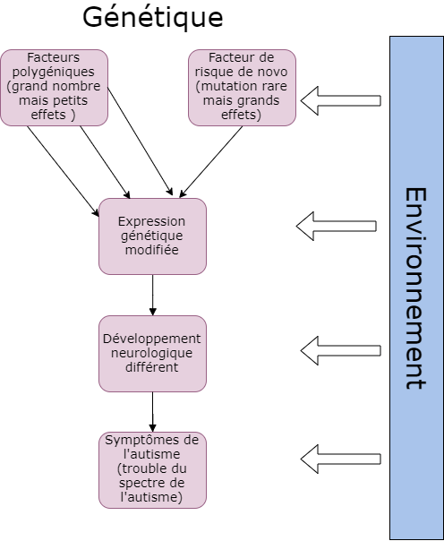 Etiologie génétique.png