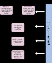 Etiologie génétique